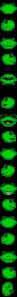 haxus-custom-frog